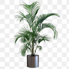 Indoor Plant Potted Plants - Houseplant Flowerpot Gardening Tree PNG