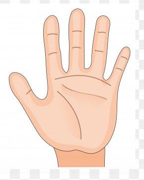 Hand Palm - Hand Arm Human Body Human Skeleton Clip Art PNG