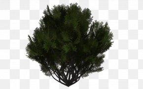 Tree - Tree Evergreen Shrub DeviantArt Branch PNG