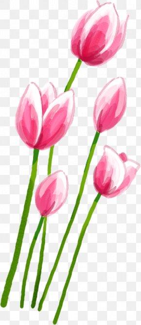 Pink Tulips - Tulip Pink Petal PNG