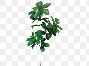Plant Flowers Material - Leaf Shrub Plant Stem Cordyline Camellia PNG