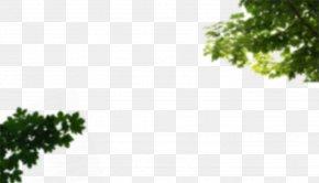 Cornus - Rasadnik Nova Pazova Bamyan Branch Leaf Tree PNG