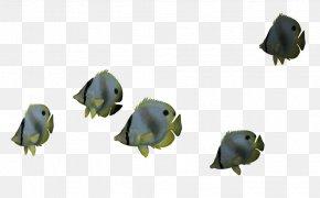 Ocean Fish File - Fish Clip Art PNG