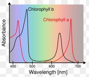 Chlorophyll - Phenol Red Eagle's Minimal Essential Medium Sulfoxide Ultraviolet–visible Spectroscopy PNG