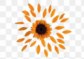 Yellow Sunflower Petals - Common Sunflower Petal PNG