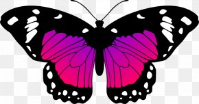 Pink Butterfly - Monarch Butterfly Black And White Drawing Clip Art PNG