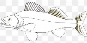 Fishing - Coloring Book Northern Pike Walleye Fishing PNG