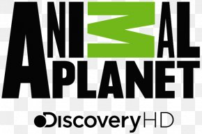 Cat - Animal Planet Cat Television Channel Discovery, Inc. PNG