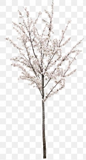 Peach Tree - Stock Photography Royalty-free Tree Stock.xchng Illustration PNG