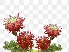 Herbaceous Plant Dahlia - Flower Plant Flowering Plant Dahlia Herbaceous Plant PNG