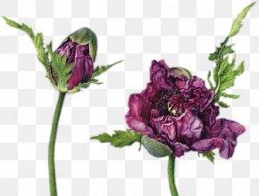 Painting - Watercolor Painting Drawing Illustrator Botany PNG