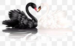 Black Swan - Black Swan Heart Clip Art PNG