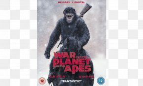 Planet Of The Apes - Blu-ray Disc Planet Of The Apes DVD 20th Century Fox Film PNG
