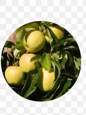 Golden Delicious - Apple Delbarestivale Fruitbedrijf Van Den Berge Citrus Juice Vesicles PNG