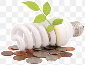 Energy Saving Light Bulbs - Energy Conservation Efficiency Renewable Energy Electricity PNG