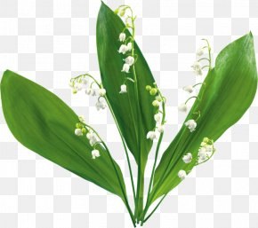 Lily Of The Valley - Lily Of The Valley Animaatio Flower Clip Art PNG