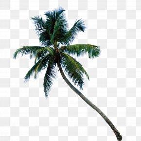 Palm Tree - Lake Andraikiba Coconut Arecaceae Paper Wallpaper PNG