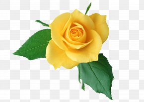 Chinese Flower - Rose Flower Yellow Clip Art PNG