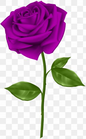 Purple Rose Transparent Clip Art - Blue Rose Flower Clip Art PNG