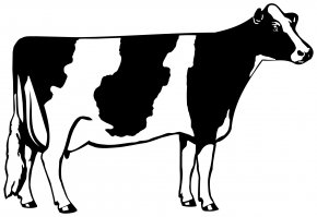 Cow Cliparts - Holstein Friesian Cattle Beef Cattle Dairy Cattle Clip Art PNG
