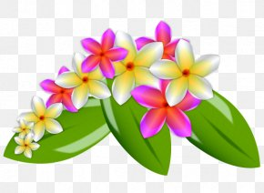 Plumeria Image - Flower Euclidean Vector Clip Art PNG