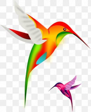 Animated Bird Cliparts - Ruby-throated Hummingbird Clip Art PNG