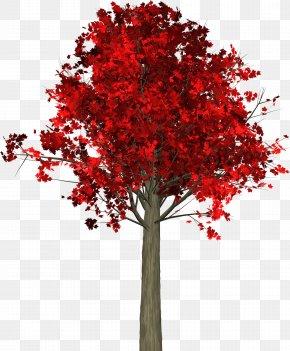 Trees - Tree Autumn Leaf Maple PNG