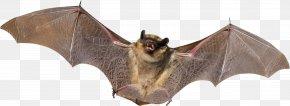 Bat - Bat Animal Bird Flight Mammal PNG