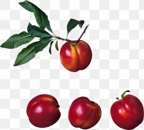 Peach Image - Peach Barbados Cherry Fruit PNG