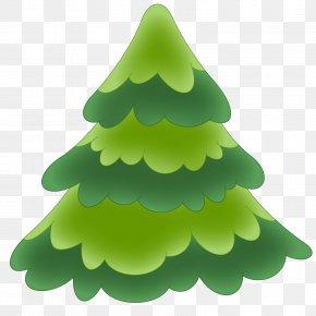 Christmas Tree - Christmas Ornament Spruce Christmas Tree Educator PNG