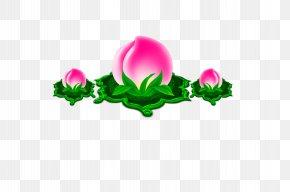 Peach St.,peach - Longevity Peach Saturn Peach Icon PNG
