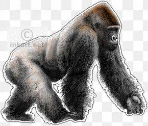 Gorilla - Western Lowland Gorilla Primate Ape Chimpanzee Drawing PNG