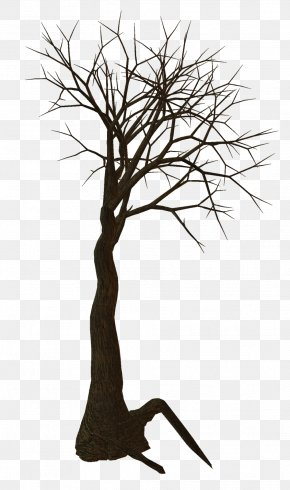 Root - Tree Woody Plant Clip Art PNG