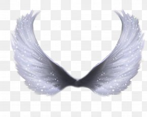 Wings - Wing Clip Art PNG