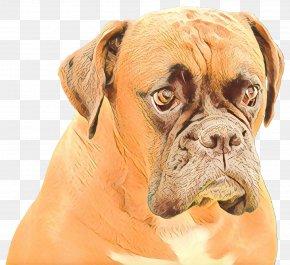 Ear Giant Dog Breed - Cartoon Dog PNG