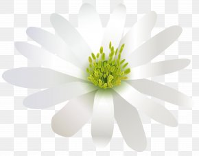 Flower White Transparent Clip Art Image - Flower White Three-dimensional Space PNG