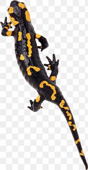 Lizard - Gecko Lizard Reptile Chameleons PNG