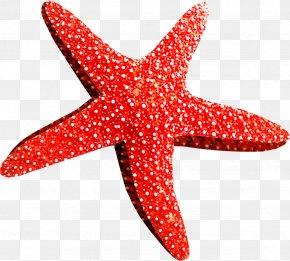 Starfish - Starfish Callopatiria Granifera Clip Art PNG