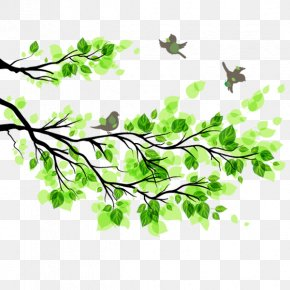 Tree Branches Green Leaf Bird Spring Material - Branch Leaf Tree Illustration PNG