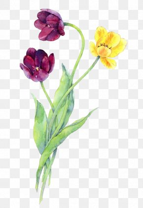 Watercolor Flowers PNG