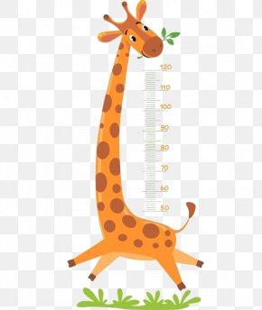 Giraffe Measure Height - Giraffe Royalty-free Illustration PNG