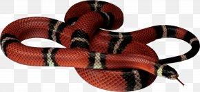 Snake - Corn Snake Reptile Clip Art PNG