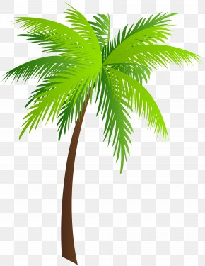 Palm Clip Art Image - Palm Trees Asian Palmyra Palm Clip Art PNG