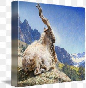 Goat - Mountain Goat Bukharan Markhor Pakistan PNG