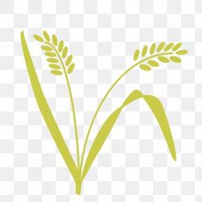 Shared Value - Leaf Grasses Plant Stem Tree PNG