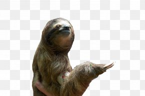 Sloth Pic - Download Icon PNG