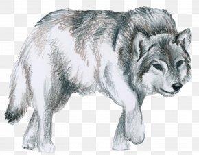 Shepherd - Saarloos Wolfdog Native American Indian Dog Canidae Alaskan Tundra Wolf PNG