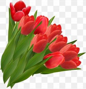 Tulip Image - Indira Gandhi Memorial Tulip Garden Clip Art PNG