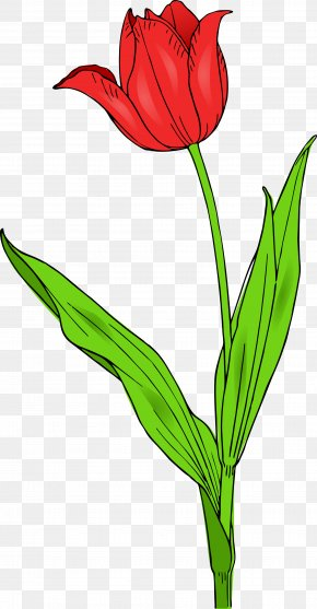 Free Tulip Clipart - Tulipa Gesneriana Flower Free Content Clip Art PNG