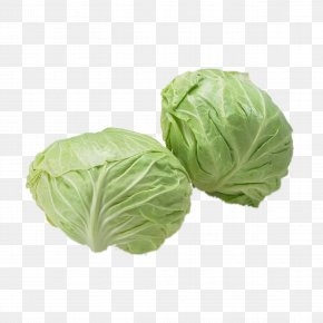 Cabbage - Napa Cabbage Vegetable Food Eating PNG